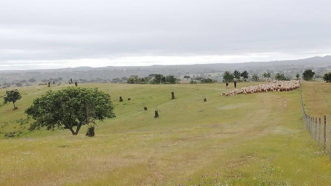 Último dia das Jornadas do Mundo Rural em Alcoutim