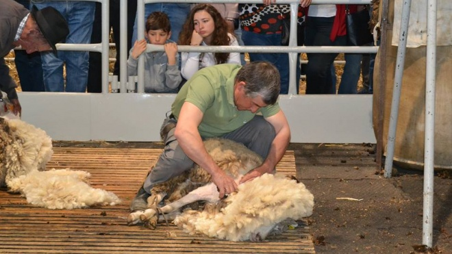 ACOS passa a gerir Fundo de Apoio ao Sector da Lã