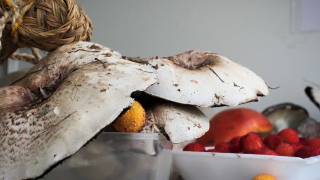 Inscrições abertas para Feira do Cogumelo e do Medronho