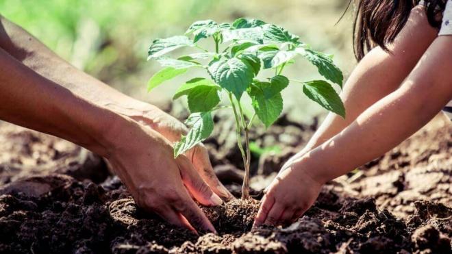 CVRA planta hoje 1200 árvores no Alentejo