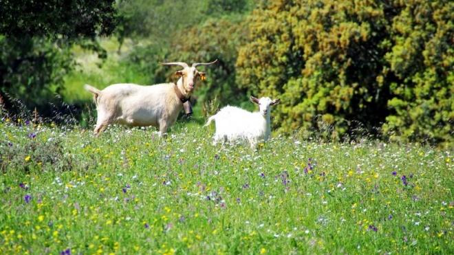 FAABA contesta restrições dos apoios às medidas agro-ambientais