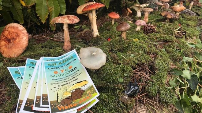 Cabeça Gorda: Festival do Cogumelo entre 6 e 8 de Março