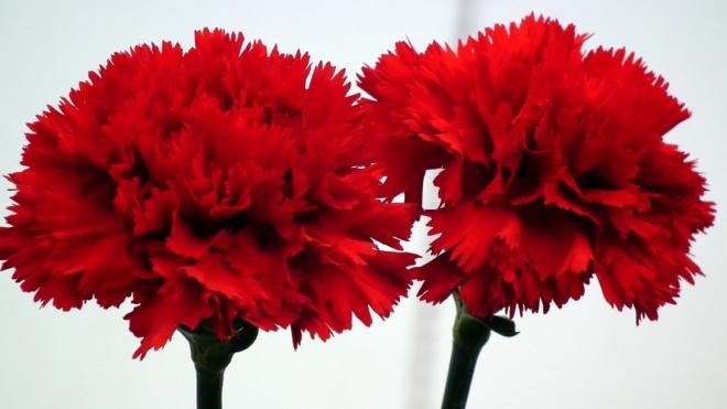 Comemorações do 46º aniversário do 25 de Abril de 1974 prosseguem hoje