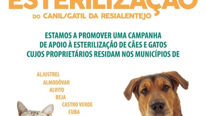 RESIALENTEJO promove campanha de esterilização de animais
