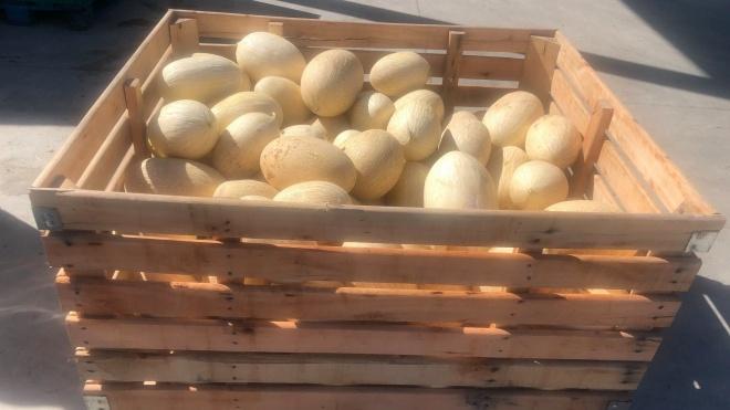 Melões e melancias doados à Cáritas por agroturismo de Ferreira do Alentejo