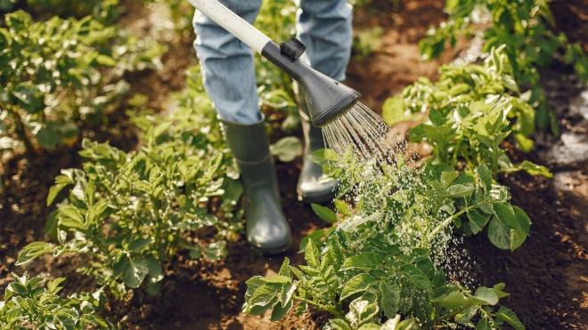 """Ministra da Agricultura: """"Estamos a trabalhar para ter uma agricultura mais ecológica e mais resiliente"""""""