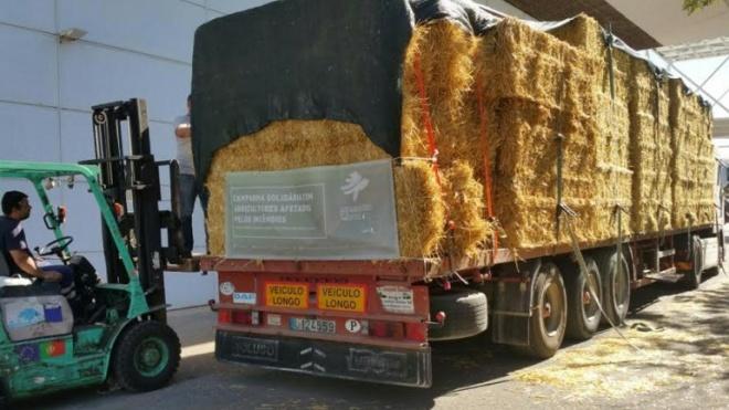 ACOS solidária com ovinicultores afetados pelos incêndios