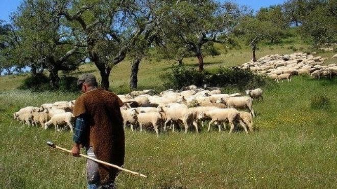 Festa dos pastores em S. Pedro de Sólis