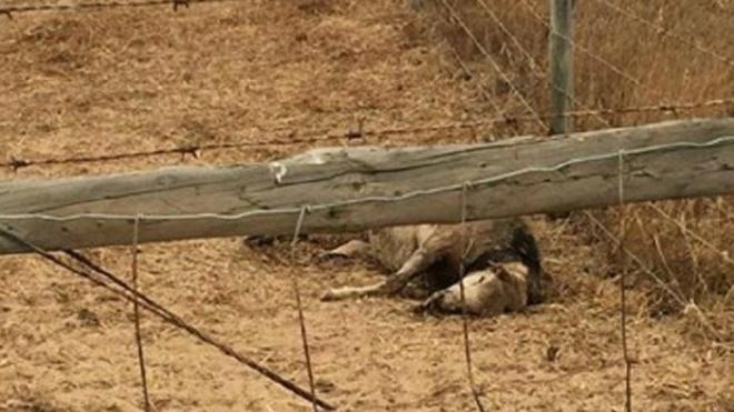 Suspensa a recolha de cadáveres animais no âmbito do SIRCA