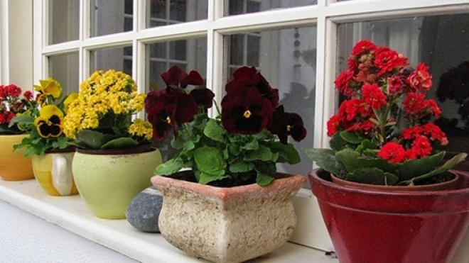 Mercado das Flores regressa a Beja a 6 de maio